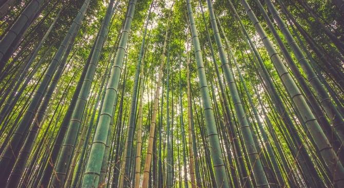 През 2018 година са унищожени 12 милиона хектара тропически гори