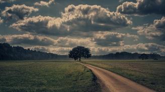 Търг за отдаване на земеделски земи обяви община Търговище