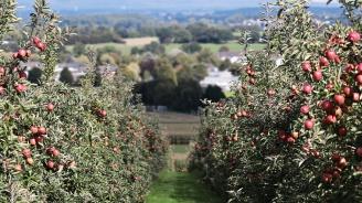 Ниските температури нанесоха поражения в овощните градини в Кюстендилско