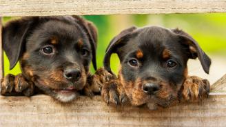 Калифорнийка може да бъде осъдена на затвор за изхвърлени на боклука кученца