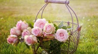 Парламентът прие на първо четене законопроект за маслодайната роза