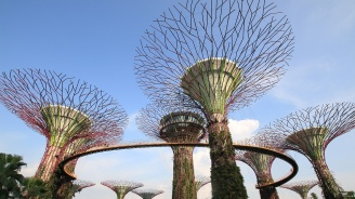 """""""Механични дървета"""" ще прочистват въздуха от въглероден диоксид"""