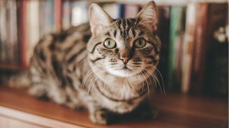 Котка скри печеливш лотариен билет