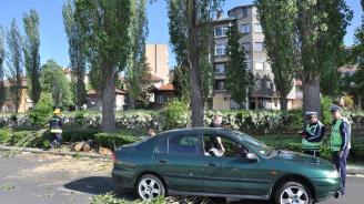 Лек автомобил се удари в паднала топола