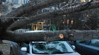 Жена е в критично състояние, след като дърво падна върху колата, в която пътува