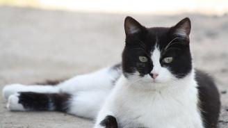 Котка се събра със стопаните си след 475-дневна раздяла заради свлачище