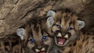 Новородени лъвчета починаха от премръзване в хасковския зоопарк
