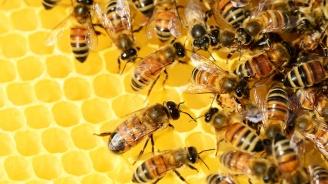 Пчелар доби 1 тон мед чрез инвитро процедури