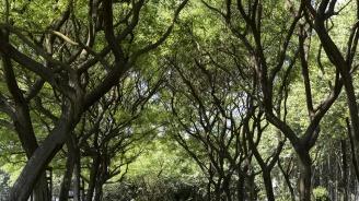 Над 200 дървета са засадени в Дупница