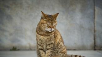 Съдят мъжа, отрязал лапата на котка с брадва