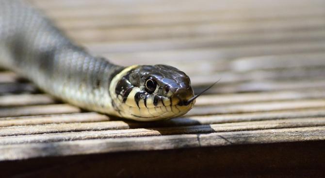 Пожарникари ловиха змии в детска градина в Мадан