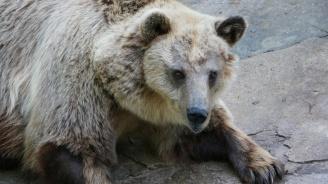 Доброволци пазят животните в Софийския зоопарк