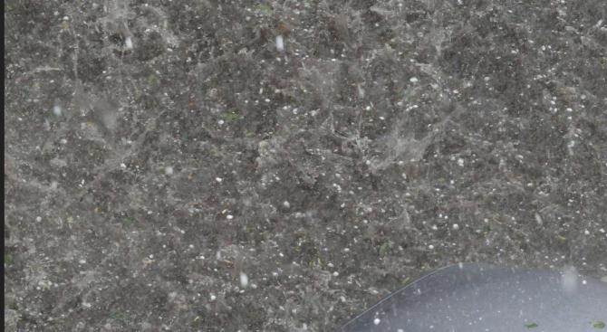 Градушка с размерите на лешник е паднала в Свищовско
