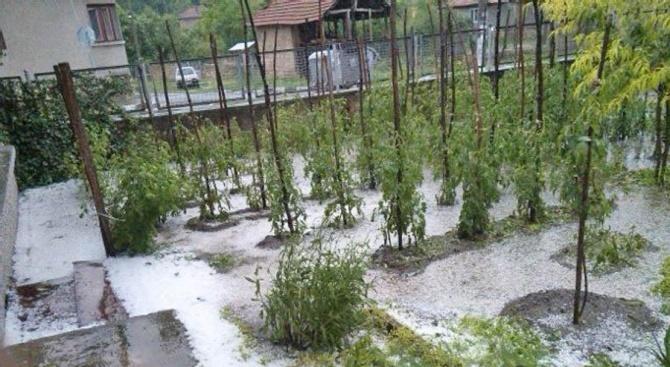 Големи щети по земеделската продукция е нанесла вчерашната градушка в
