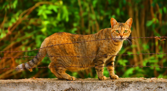 Радомирец е изправен на съд за проявена жестокост към котка.