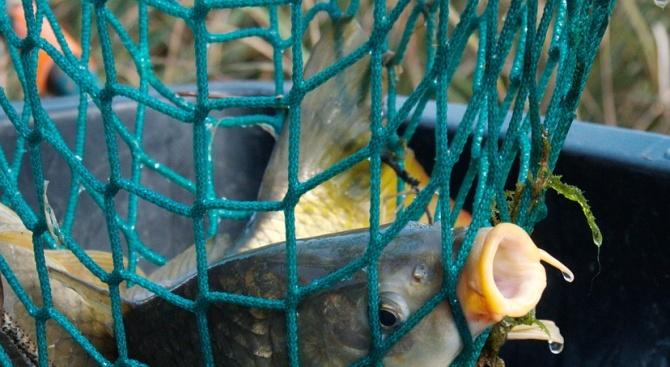 Близо 400 метра бракониерски мрежи и риба са извадени от