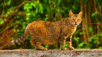 Съдят радомирец, ударил бременна котка