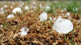 В община Левски земеделската продукция е унищожена 100 % от градушката вчера в пет селища