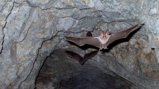 """Пещерата """"Бисерна"""" на Шуменското плато се затваря за посещения"""