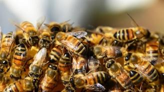 Испанци откриха 80 000 пчели в стената на спалнята си