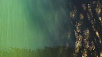 Водорасли причиниха смъртта на милиони сьомги в Норвегия