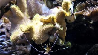 Планктонът мигрира на север заради климатичните промени