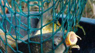 """400 метра бракониерски мрежи бяха извадени от язовир """"Ястребино"""""""