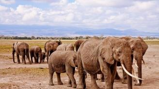 Ботсвана вдига забраната за лов на слонове