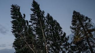 Германци висяха два часа на дърво