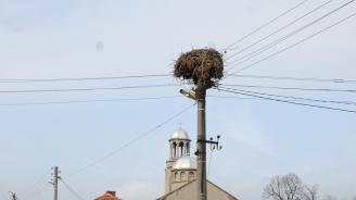 """Стартираха теренните проучвания по проект на ЧЕЗ """"Живот за птиците"""""""