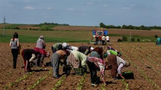 Над 90% от тютюна реколта 2019 в България е разсаден