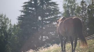 Мъртви коне са открити в гориста местност край село Панагюрски колонии