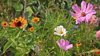 Над 50 000 цветя ще бъдат засадени в Шумен