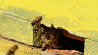 Община Шумен уведомява пчеларите за предстоящо пръскане