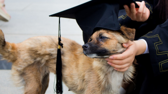 Училищата за кучета са полезни