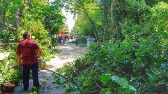 24 сигнала за наводнения и паднали дървета след дъждовете в Пловдив