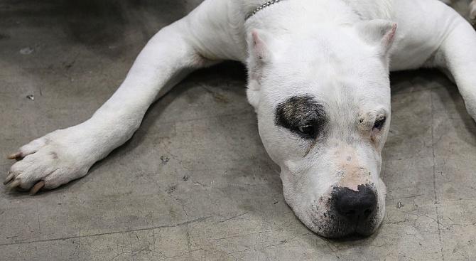 Стабилно е състоянието на 34-годишната жена, нахапана от куче в