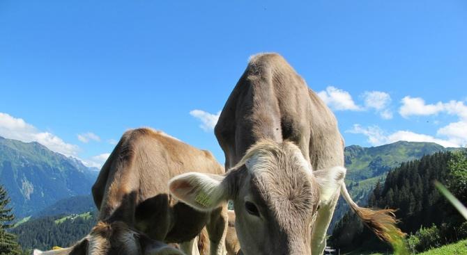 От днес производителите могат да обозначават продуктите си от планински