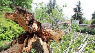 Дърво падна върху мъж и го уби в Кюстендилско