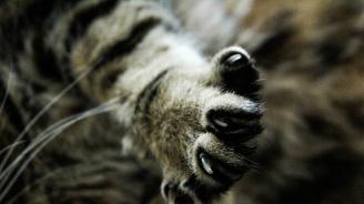 В Ню Йорк забраняват премахването на ноктите на котките
