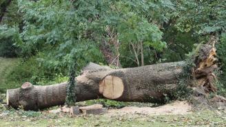 Как да изсечем един парк дървета, но законно