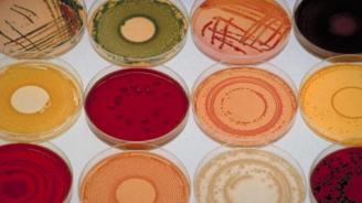 Учени откриха какво е предизвикало първата чума