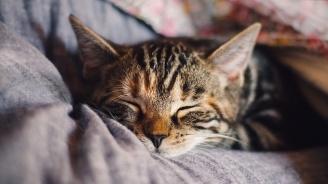 Британците кръщават най-често котките си Попи и Оскар