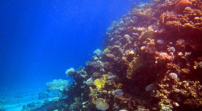 Учени местят корали в Червено море, за да ги спасят