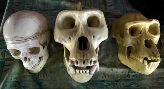 Изчезването на неандерталците може да се обясни с леко намаляване