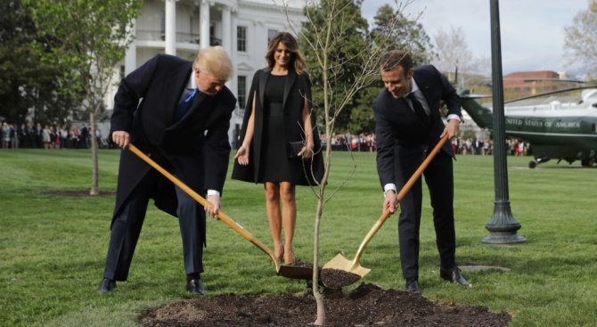Макрон ще подари на Тръмп ново дръвче, след като подареният от него дъб изсъхна