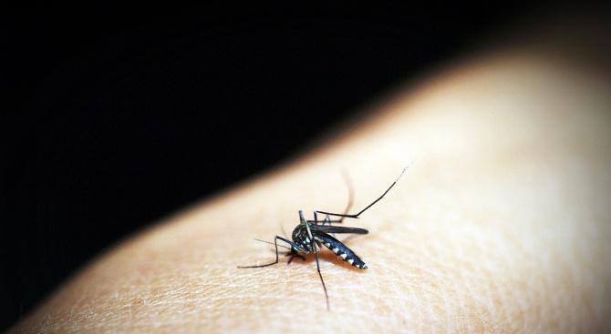 Пазете се от комарите в Гърция, защото разнасят западнонилска треска.