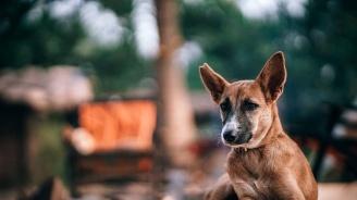 Каварна работи за овладяване на популацията на бездомните кучета