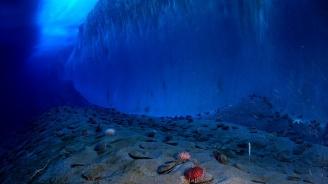 Откриха останки от гигантско морско чудовище в Антарктида