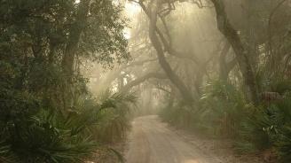 Почти 600 растителни вида са изчезнали от дивата природа за 250 години